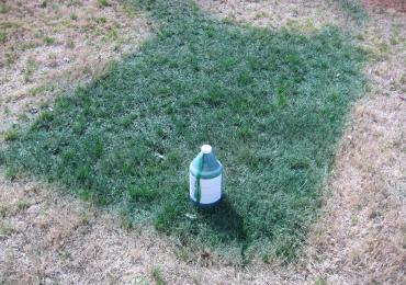 spray green grass paint turf dye turns brown dormant lawn grass green. Black Bedroom Furniture Sets. Home Design Ideas