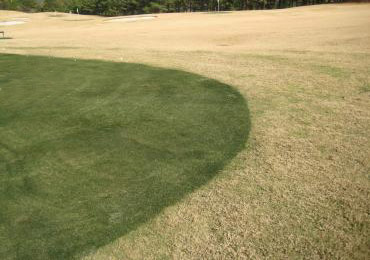 how to turn brown grass green fast